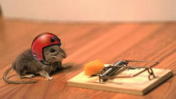 mouse-trap-helmet-small
